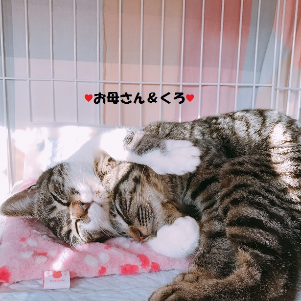 【里親さま募集】置いて行かれた猫8匹-その後-_f0242002_13435795.jpg