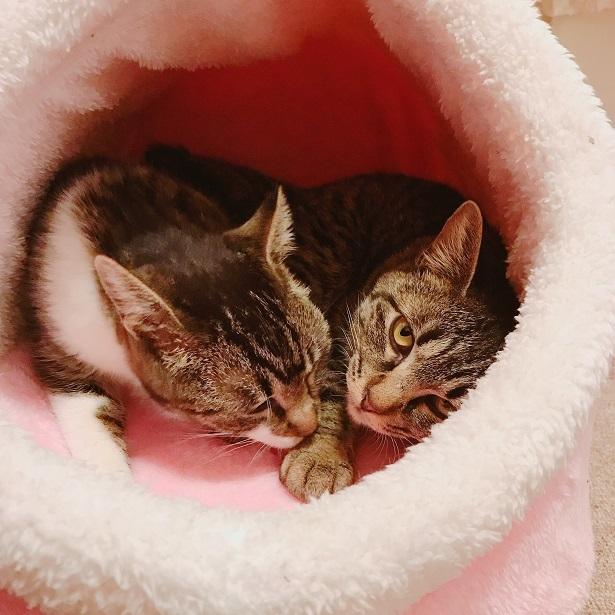 【里親さま募集】置いて行かれた猫8匹-その後-_f0242002_13440155.jpg