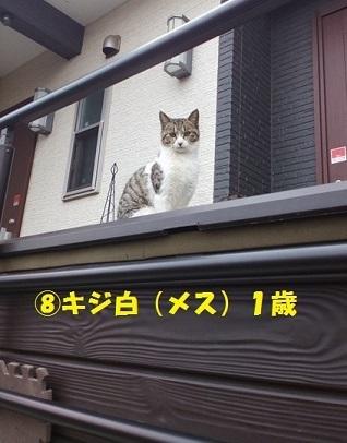 【里親さま募集】置いて行かれた猫8匹-その後-_f0242002_14575536.jpg