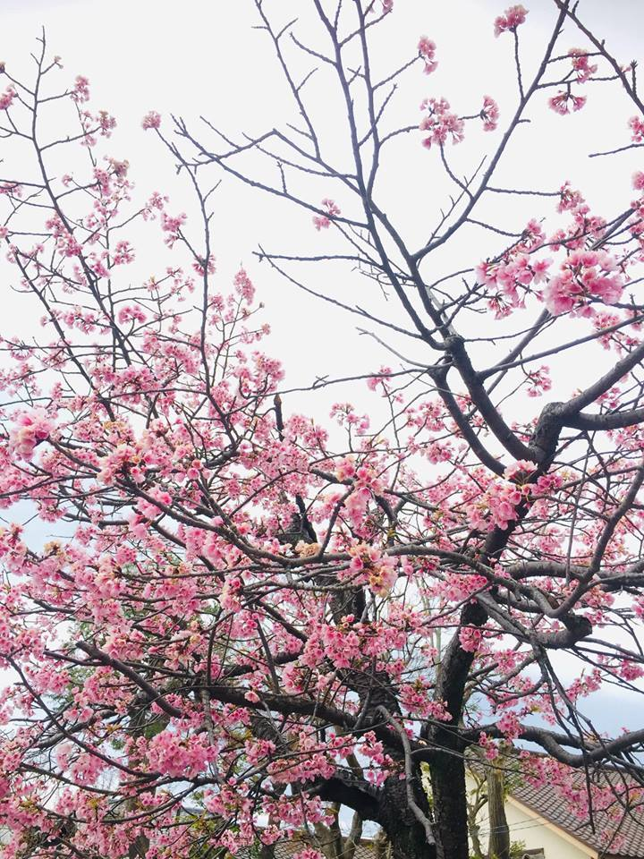 着物で憧れの鎌倉を歩く!!_a0126418_22275239.jpg