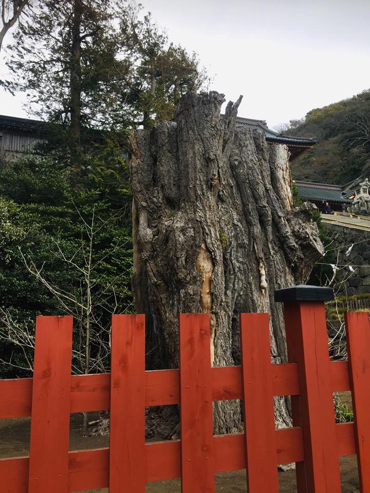 着物で憧れの鎌倉を歩く!!_a0126418_22285037.jpg