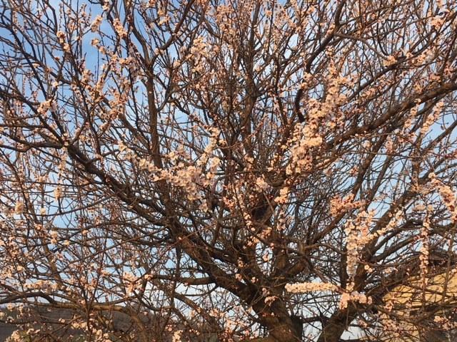 3月22日 高松請願行動_e0246120_19043402.jpg