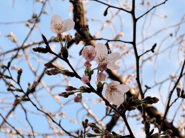 春分の虹_c0062832_00255439.jpg