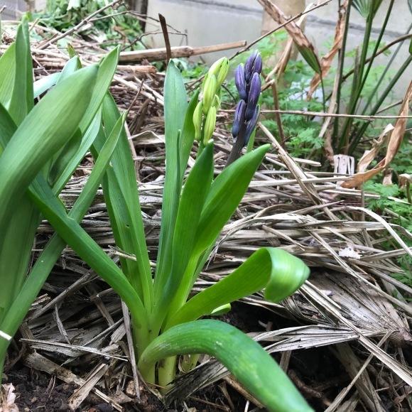 春ですね_c0229032_12512045.jpg