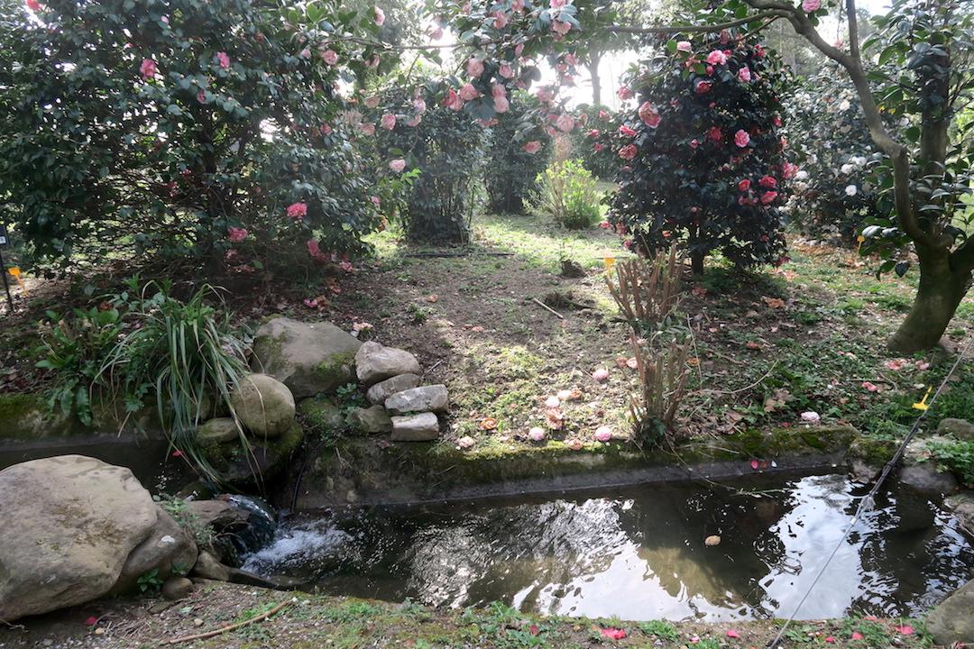 美しい椿の小道 庭園の景、ルッカ マルリア邸_f0234936_749873.jpg