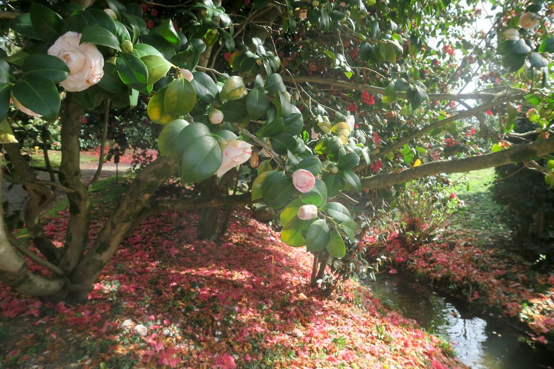 美しい椿の小道 庭園の景、ルッカ マルリア邸_f0234936_7564364.jpg
