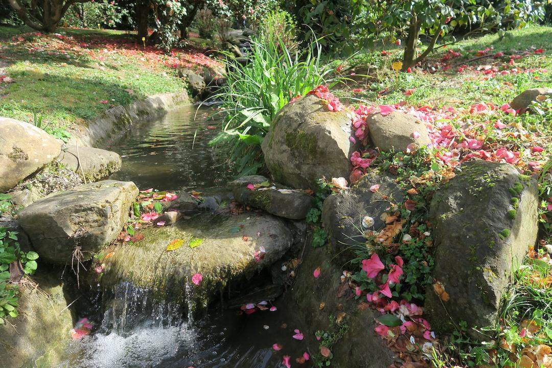 美しい椿の小道 庭園の景、ルッカ マルリア邸_f0234936_7571477.jpg