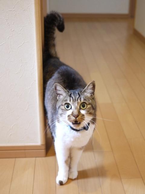 猫のお留守番 ハッピーくん編。_a0143140_21051948.jpg