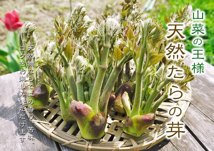 平成31年度の「天然たらの芽」予約受付スタート!!4月上旬からご予約順に発送します!_a0254656_18031205.jpg
