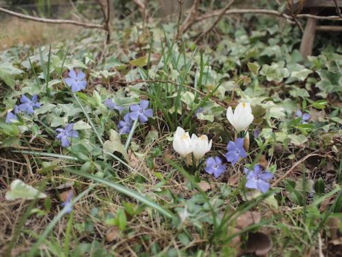 ゆるっと春。_a0335560_19292775.jpg