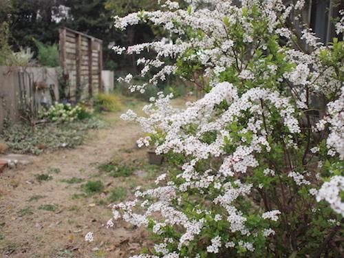 ゆるっと春。_a0335560_19292789.jpg