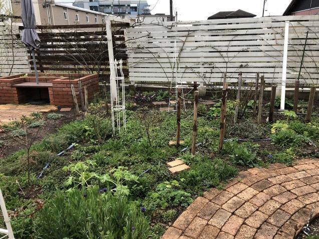 3月の庭_a0243064_17314587.jpg