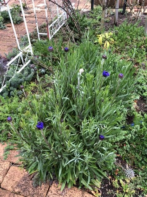 3月の庭_a0243064_17350232.jpg