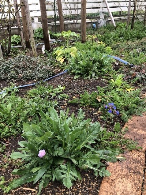 3月の庭_a0243064_17354724.jpg
