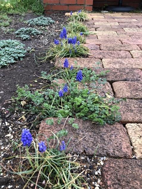 3月の庭_a0243064_17394294.jpg