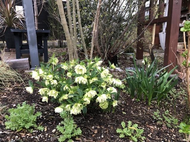 3月の庭_a0243064_18054095.jpg