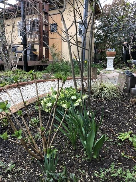 3月の庭_a0243064_18064689.jpg