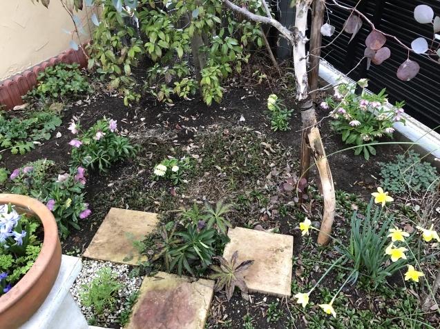 3月の庭_a0243064_18194297.jpg