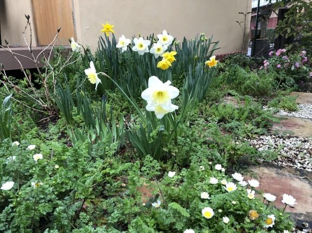 3月の庭_a0243064_18201024.jpg