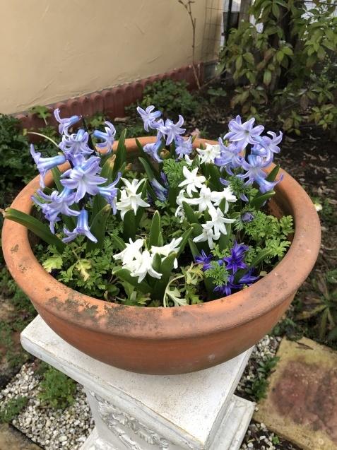 3月の庭_a0243064_18212971.jpg