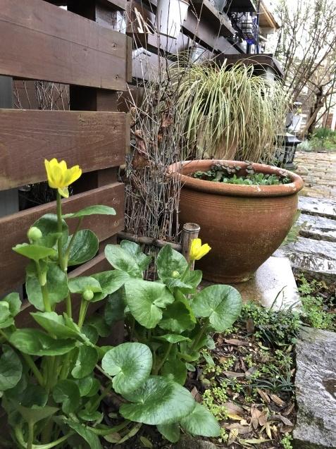 3月の庭_a0243064_18243174.jpg