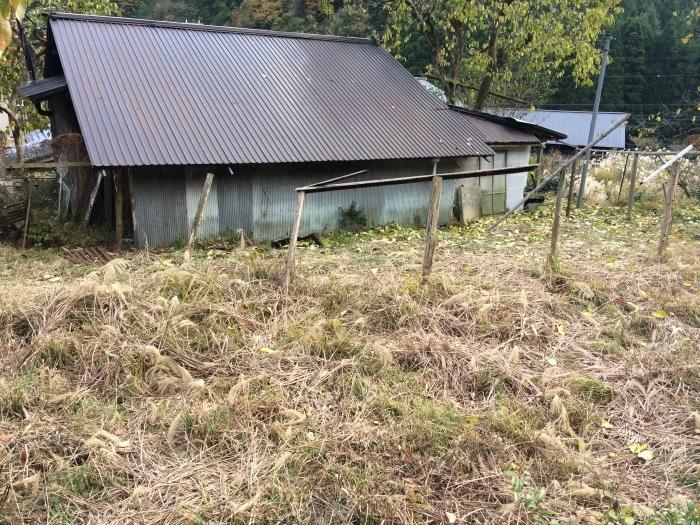 畑のこと 2017秋〜2018春_b0057979_16135234.jpg