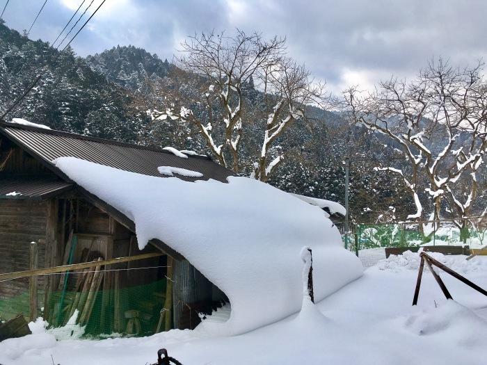 畑のこと 2017秋〜2018春_b0057979_16165367.jpg