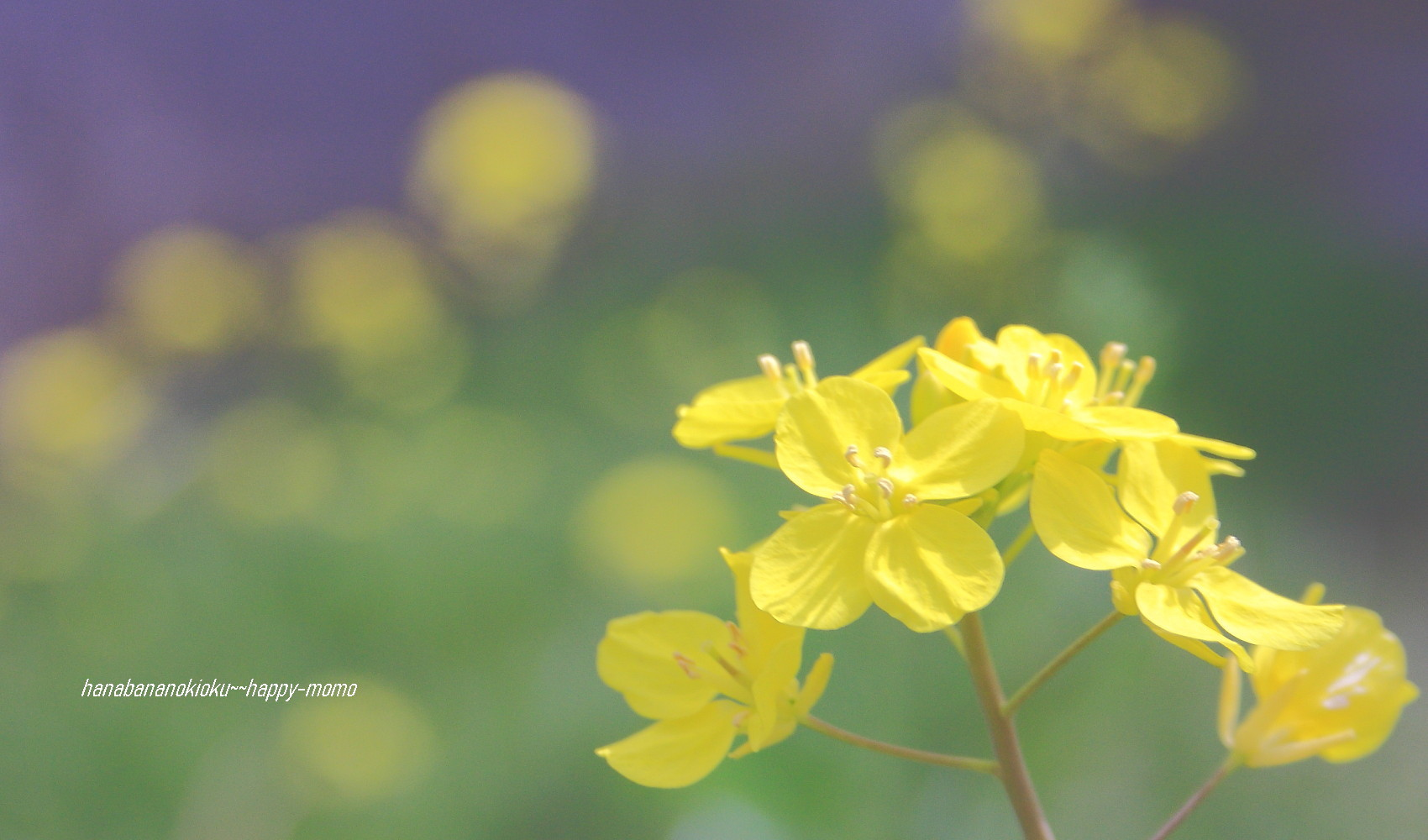 野に咲く花に 逢いたくて・・_c0357781_11521003.jpg
