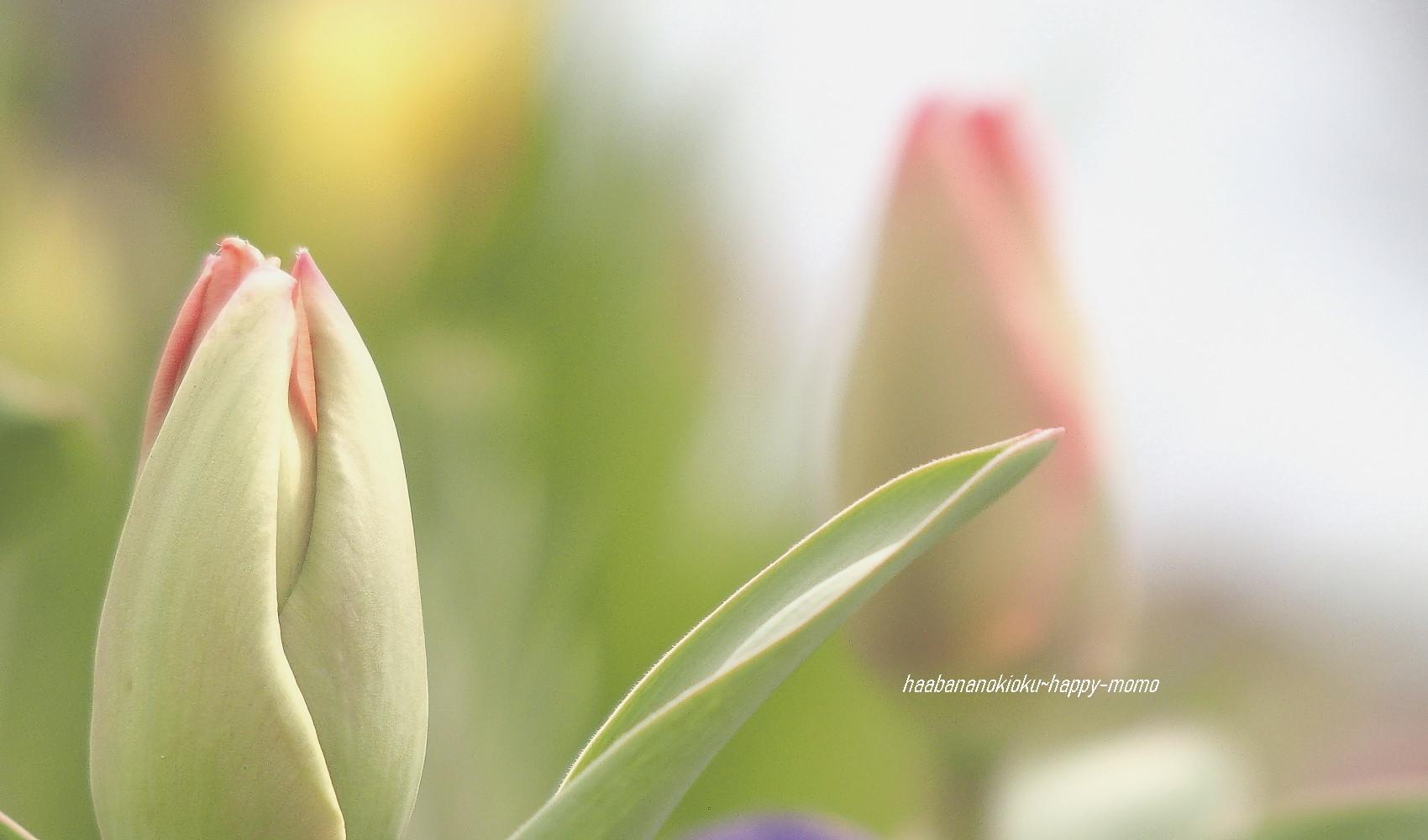 野に咲く花に 逢いたくて・・_c0357781_11544195.jpg