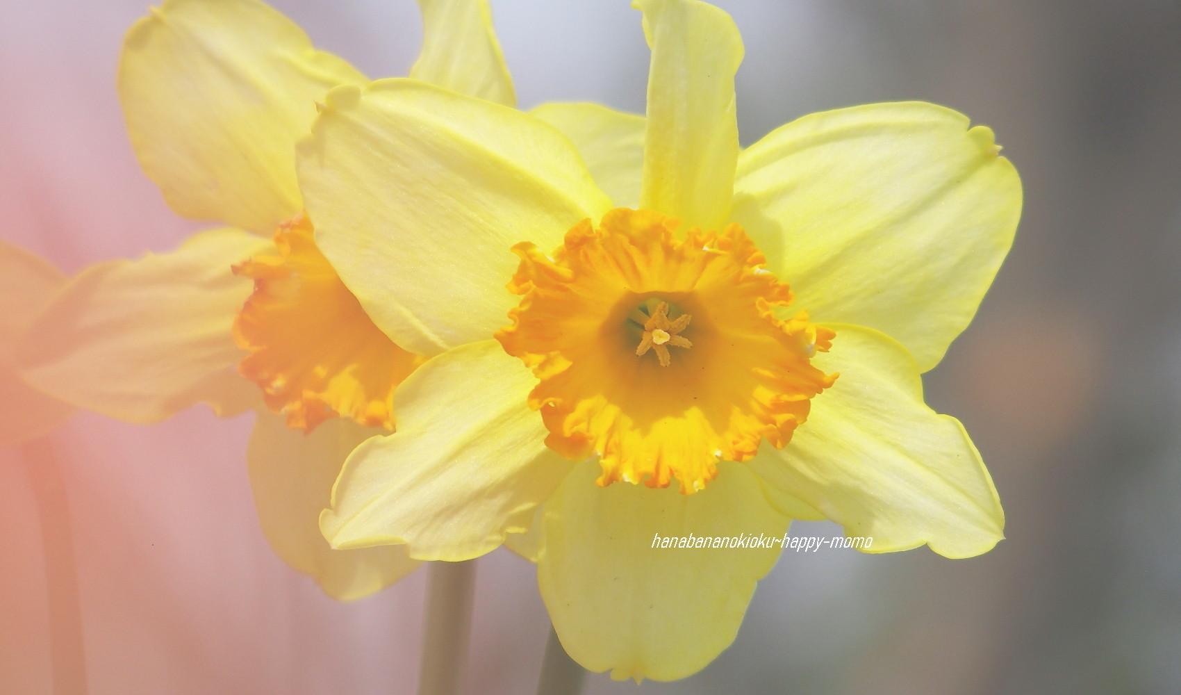 野に咲く花に 逢いたくて・・_c0357781_11550457.jpg