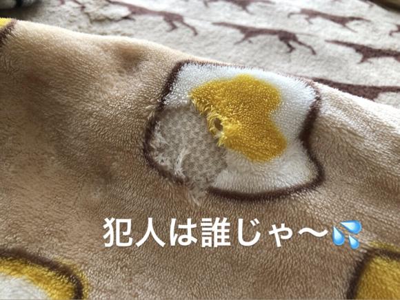 嬉しいお芋さん♪ & りるちゃん、ありがとう!_c0028792_19511825.jpg