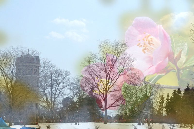 温室の花・・・4_d0162994_08034339.jpg