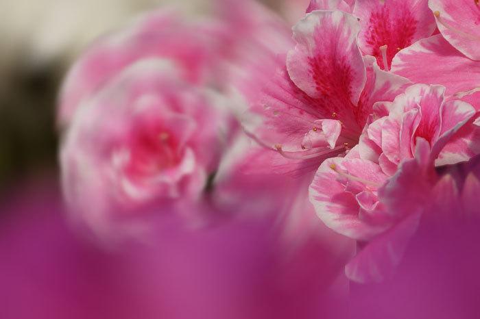 温室の花・・・4_d0162994_08040911.jpg