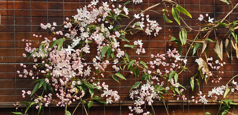 温室の花・・・4_d0162994_08042168.jpg