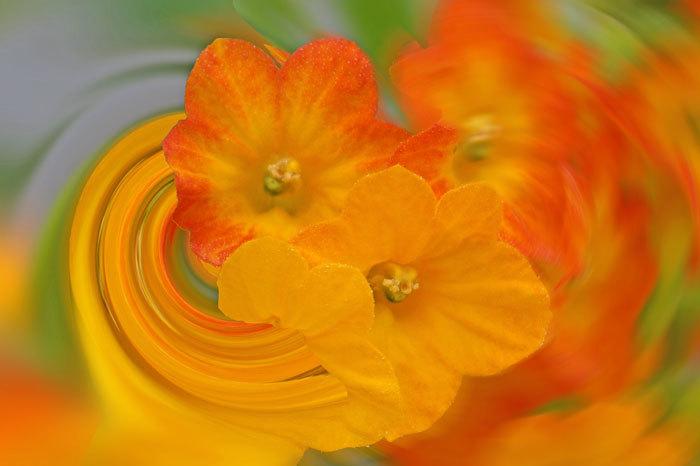 温室の花・・・4_d0162994_08044272.jpg