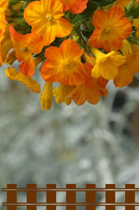 温室の花・・・4_d0162994_08125335.jpg