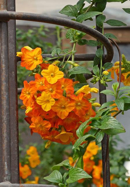 温室の花・・・4_d0162994_08173404.jpg