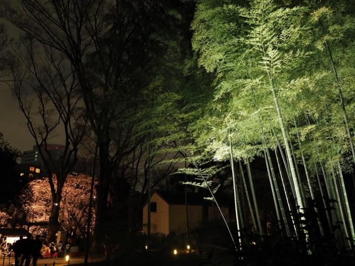 東京の桜 六義園_f0224100_23194966.jpg