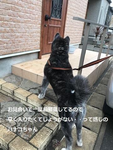 花虎ちゃん 新生活スタート!_f0242002_19261075.jpg