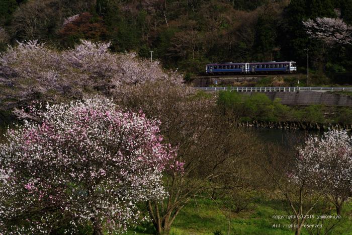 花桃が咲き始めて_d0309612_00103349.jpg