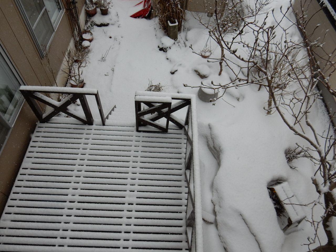 根雪の終日はキャンセルされました_c0025115_22003813.jpg