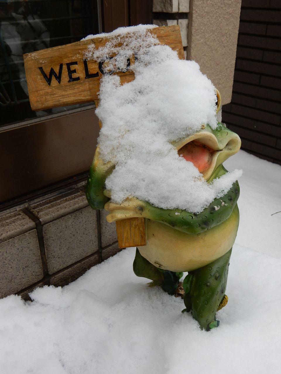 根雪の終日はキャンセルされました_c0025115_22005956.jpg