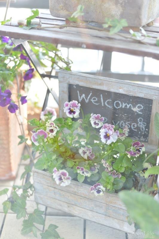 キャベツのお皿に春のお花を♪_f0321522_10410204.jpg