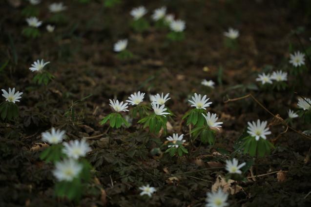 春の野原で_c0104227_11023602.jpg