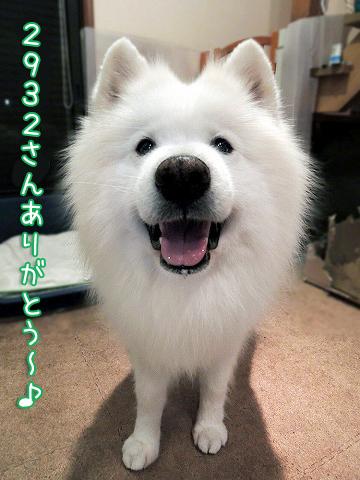 お彼岸クローカ_c0062832_15324003.jpg