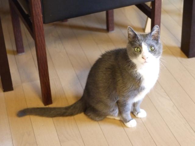 猫のお留守番 カン太くん編。_a0143140_22110987.jpg