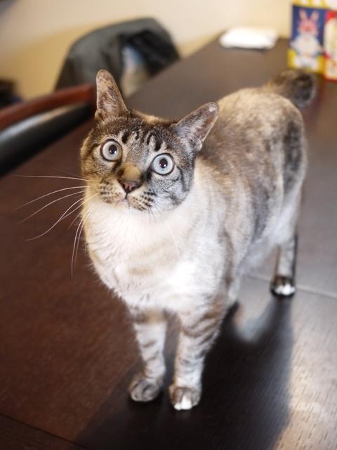 猫のお留守番 ルノーちゃん編。_a0143140_22154570.jpg
