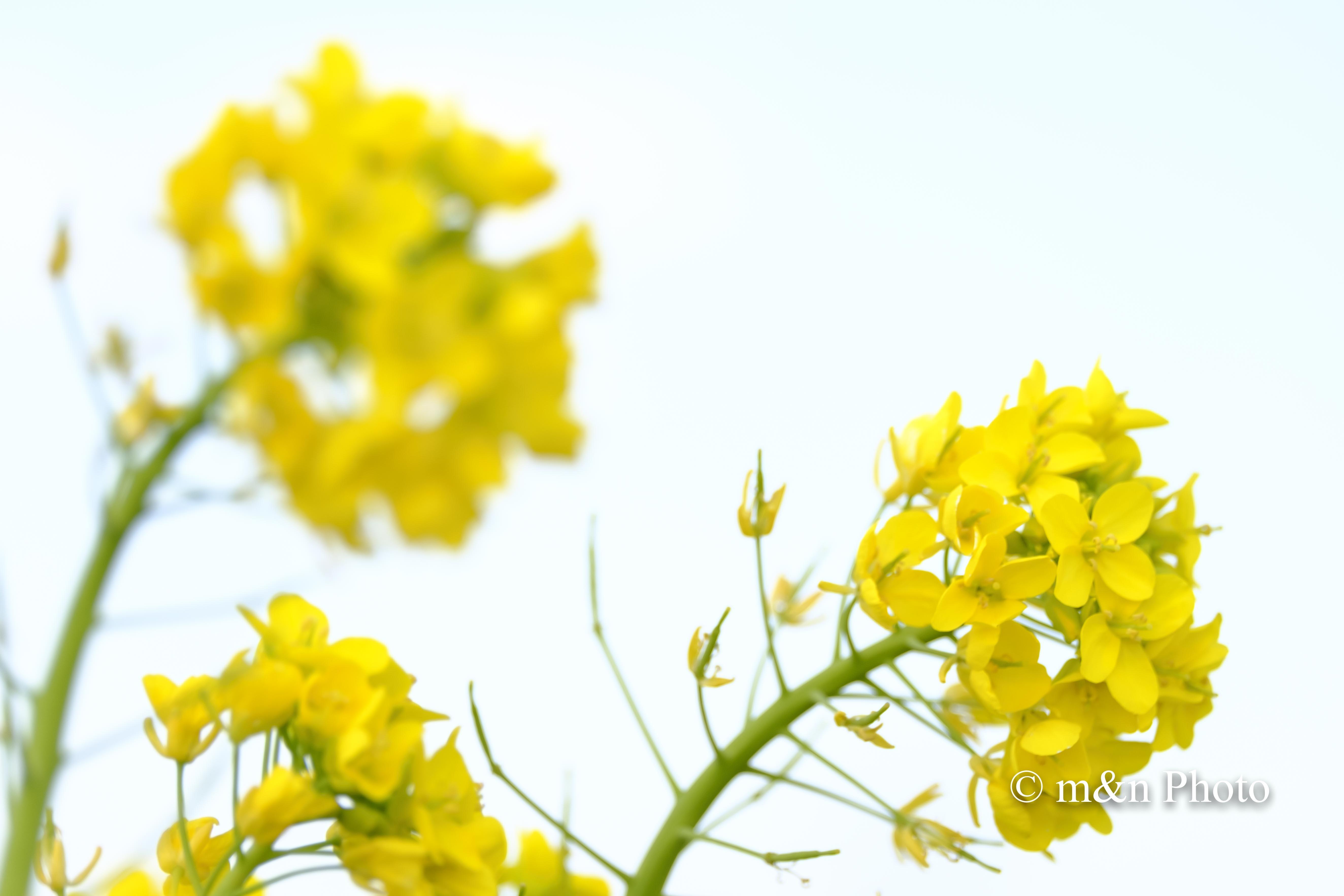 強風_e0321360_01245566.jpg