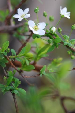 木の花_b0189573_13382045.jpg