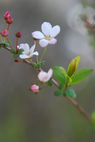木の花_b0189573_13383903.jpg